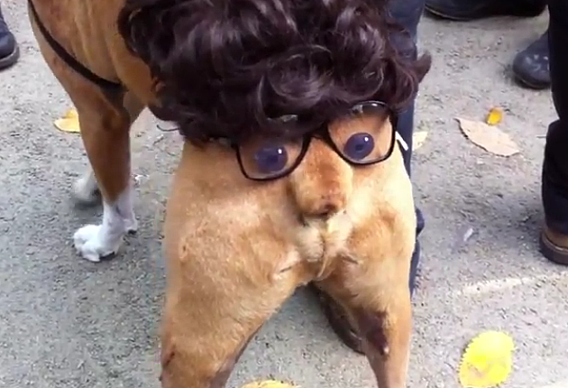 butt head dog costume