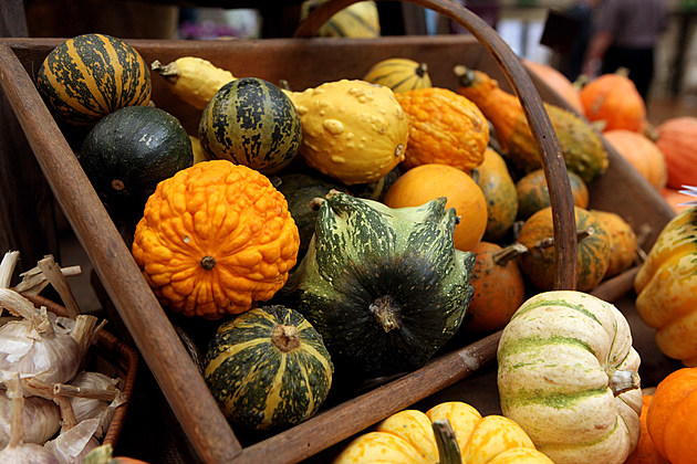 The RHS Taste Of Autumn Show Opens To The Public